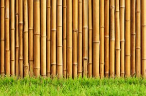 Wallpaper Bambu