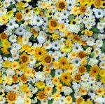 Wallpaper Motif Bunga Matahari