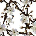 Wallpaper Corak Bunga Melati