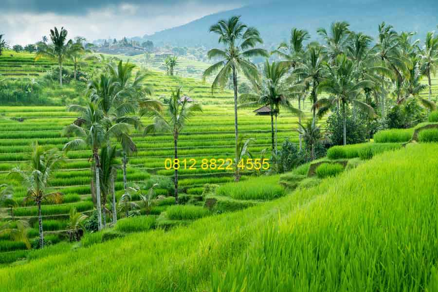 Download 570 Koleksi Background Pemandangan Keren Gratis Terbaru