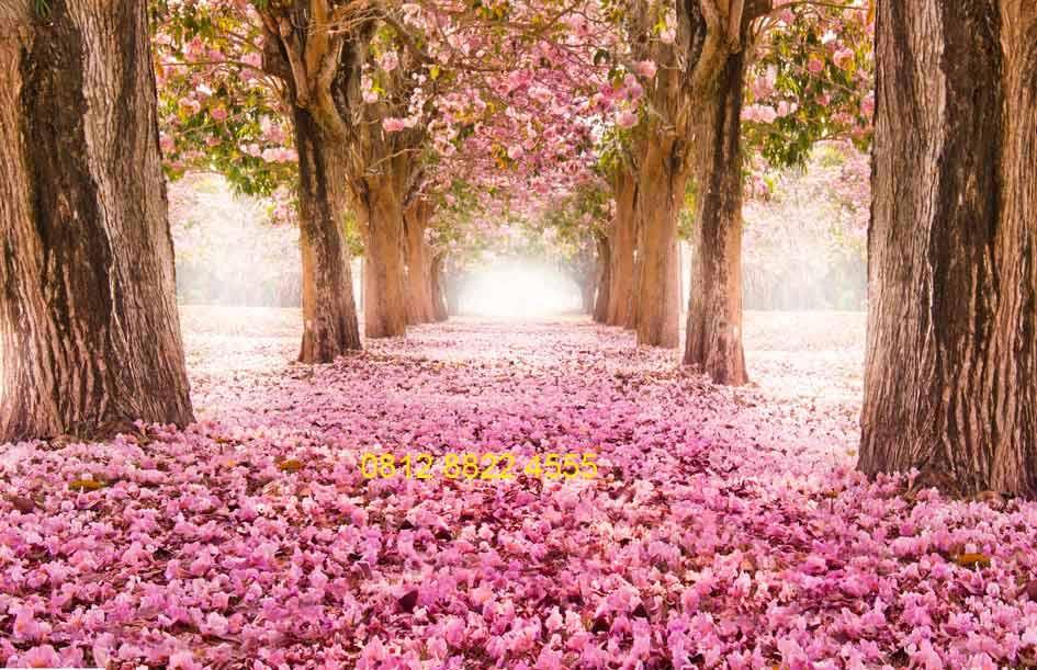 HD Wallpaper Wa Bunga Sakura  Download Koleksi Wallpaper Imut